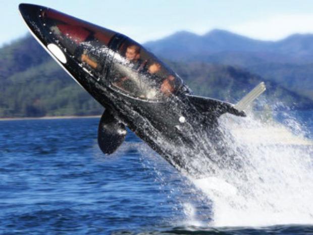 killer-whale-sous-marin